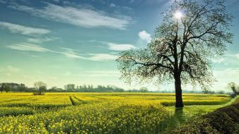 Trees fields wallpaper