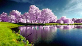 Water trees leaves scenic Wallpaper