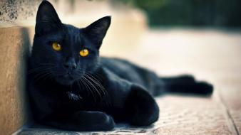 Close-up cats animals yellow eyes wallpaper