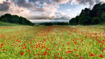 Clouds landscapes flowers fields poppies wallpaper