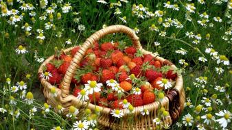 Flowers fruits grass strawberries baskets Wallpaper