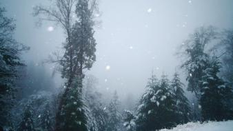 Landscapes winter snow trees forest evergreens snowing Wallpaper