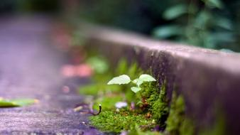 Nature plants moss macro ground focused wallpaper