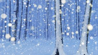 Nature snow trees forest snowy wallpaper