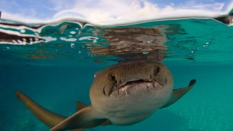 Sharks nurse life aquatic underwater waterscapes split-view wallpaper