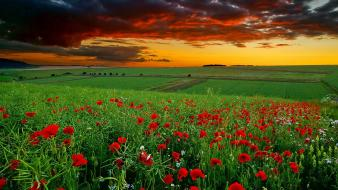 Sunset landscapes fields poppies wallpaper