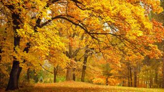 Trees autumn (season) parks fallen leaves wallpaper