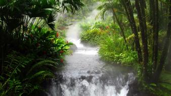 Trees jungle leaves streams rainforest Wallpaper