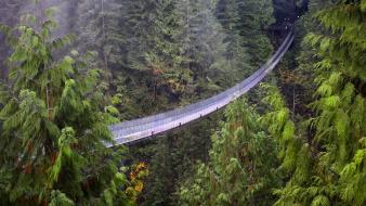Vancouver british columbia suspension bridge capilano wallpaper