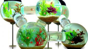 Water fish aquarium creative wallpaper