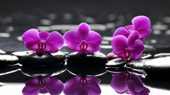 Water flowers stones selective coloring reflections orchids pink wallpaper