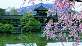 Water japan cherry blossoms flowers asian architecture bushes wallpaper