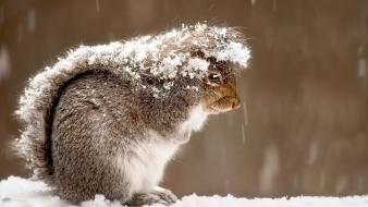 Winter snow animals outdoors squirrels wallpaper