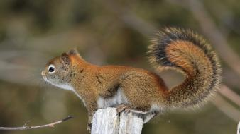 Animals squirtle squirrels wallpaper