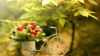 Bicycles plants motorbikes wallpaper