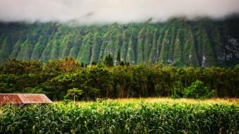 Landscapes nature trees fields hawaii mist wallpaper