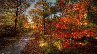 Landscapes nature trees leaves roads autumn wallpaper