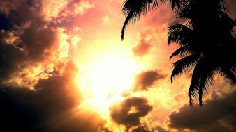 Sunset sun text red dawn coconut tree wallpaper