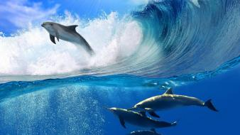 Swimming dolphins wallpaper