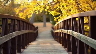 Trees bridges wooden bridge parks kansas Wallpaper