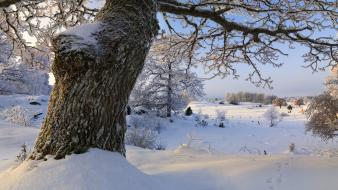Winter snow trees wallpaper