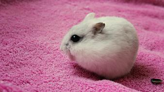 Animals hamsters pink seeds wallpaper