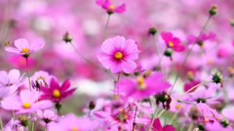 Flowers pink wallpaper