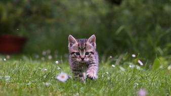 Green cats animals grass kittens Wallpaper