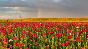 Landscapes nature flowers fields rainbows poppies wallpaper