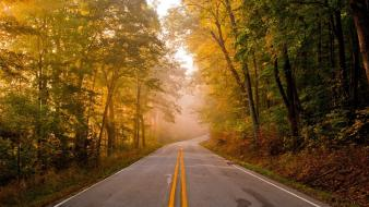 Landscapes nature trees forest roads wallpaper
