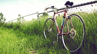 Nature bicycles grass wallpaper