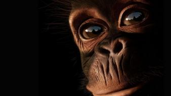 Nature eyes animals mankind chimpanzee primates primate ape wallpaper