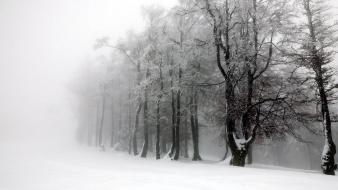 Nature snow trees white forest wallpaper