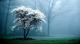 Nature trees flowers mist wallpaper