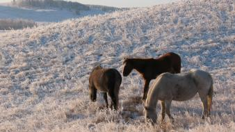 Nature winter frost pasture wallpaper