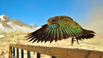 Parrots national geographic new zealand railing birds wallpaper