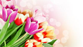 Tulips roses wallpaper