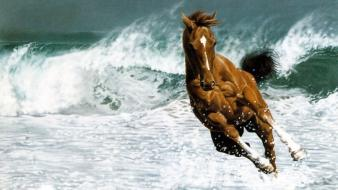 Waves animals horses running wallpaper