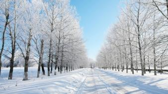 Winter snow trees roads wallpaper