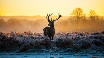 Animals fog deer elk uhdtv wallpaper