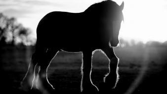 Animals silhouette horses grayscale sunlight blurred background wallpaper