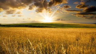 Landscapes fields wallpaper