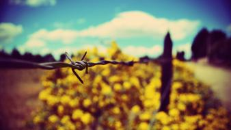 Minimalistic fences barbed wire Wallpaper