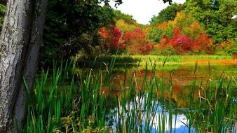 Trees grass lakes wallpaper