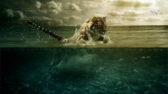 Water abstract tigers leap feline split-view wallpaper