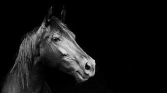 Black and white horses wallpaper