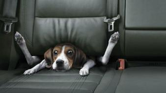 Bmw dogs funny animals car seat wallpaper
