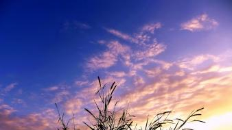 Clouds nature grass skyscapes skies wallpaper