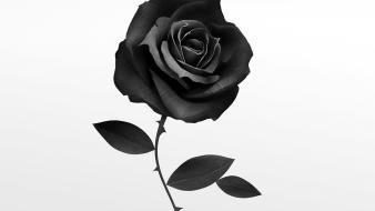 Grayscale artwork roses white background ruben ireland wallpaper