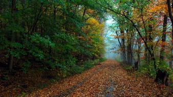 Landscapes forest leaves autumn wallpaper